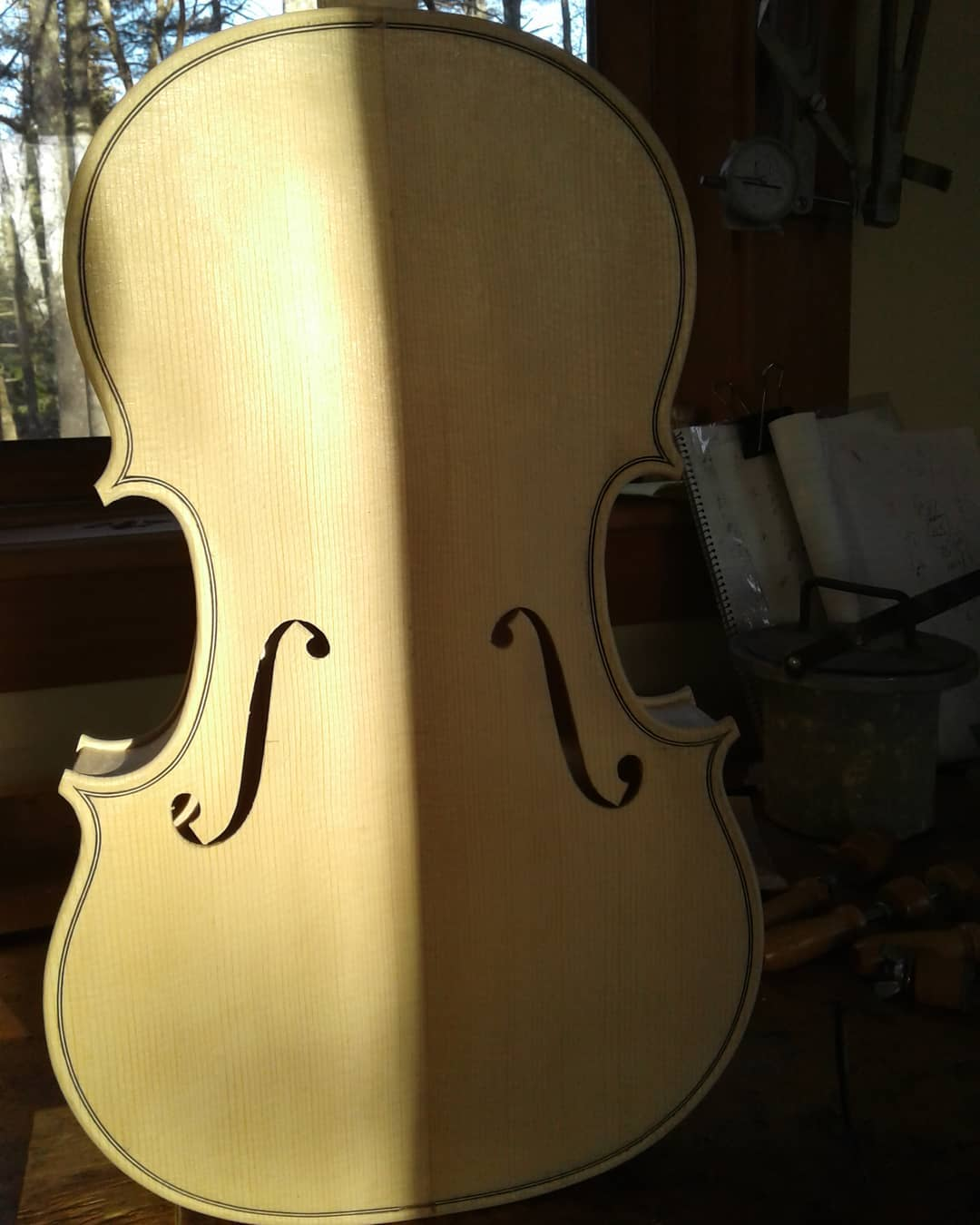 Using natural light.com # viola